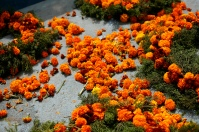 Marigolds are the favorite flower for the Day of the Dead. Their color is so bright and cheerful.